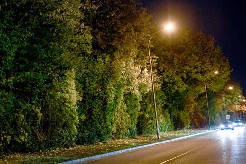 Eine Straße und die angrenzende Grünanlage im Industriegebiet Nord hinter einem Diskothekenareal wird nachts von Straßenlaternen erleuchtet. Hier sollen elf Männer eine 18-Jährige vergewaltigt haben.
