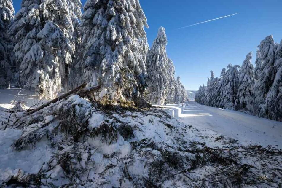 In den Wäldern rund um den Fichtelberg knicken immer wieder Äste von den Bäumen ab.
