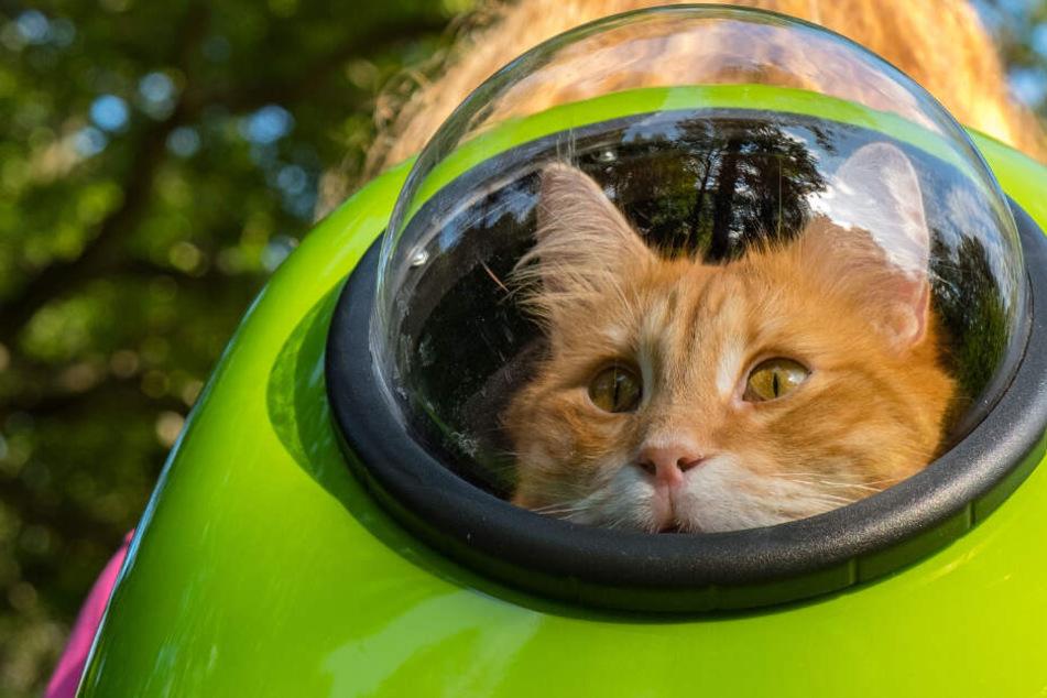 Dieses Katzenrätsel macht Leute wahnsinnig! Wer knackt es?