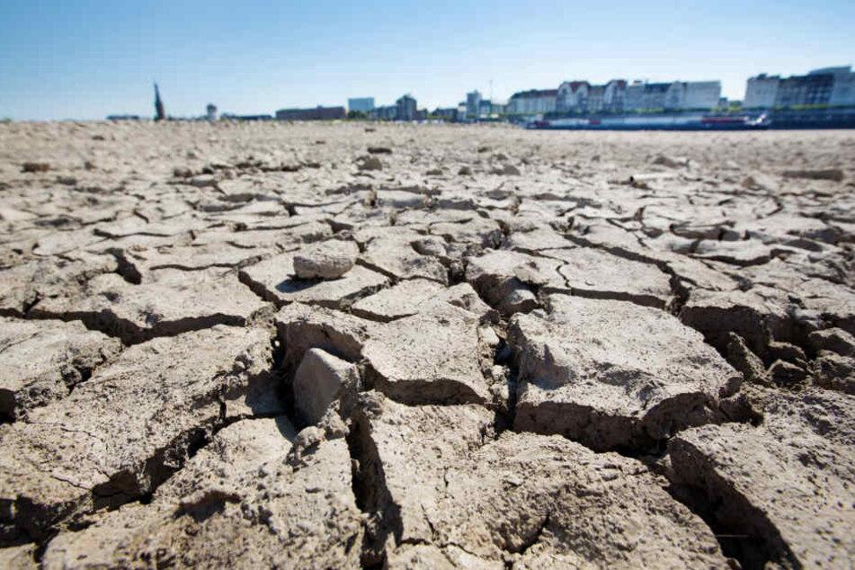 Am Düsseldorfer Rheinufer sind durch die anhaltende Trockenheit Risse entstanden.