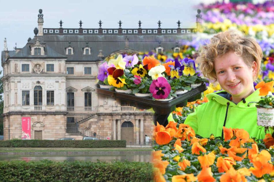 Dresden: Dresdner Frühling 2020 im Großen Garten: Hier blüht es jetzt schon!