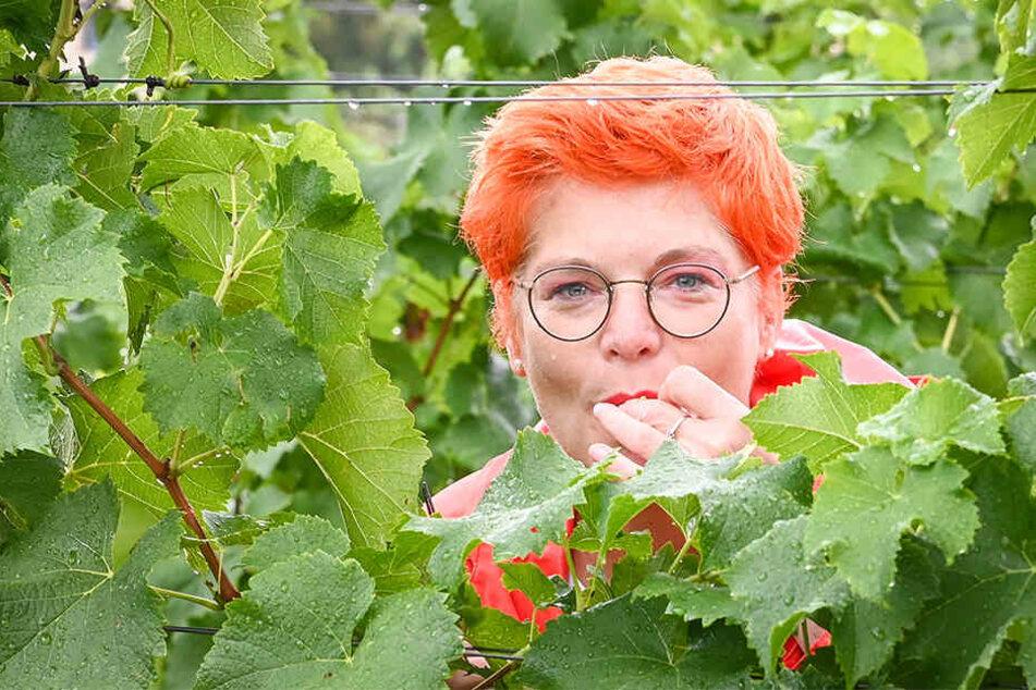 Bei aller Arbeit darf der Genuss nicht zu kurz kommen. TAG24-Reporterin Katrin Koch nascht von den süßen Trauben.