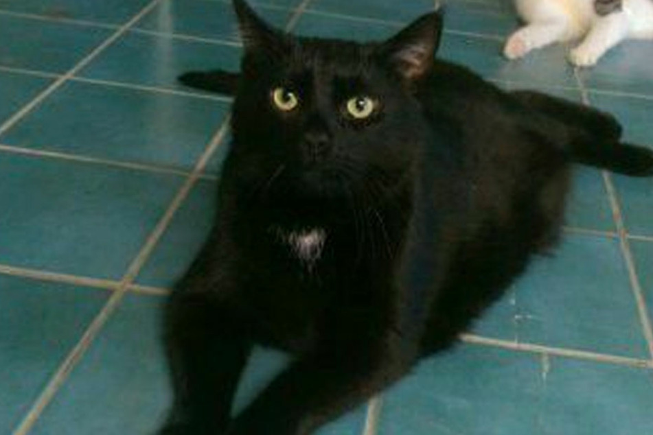 Kater Lucky hatte mit seinen alten Besitzern nicht so viel Glück. Jetzt sucht er ein neues Zuhause in Gesellschaft mit einer anderen Katze oder allein.