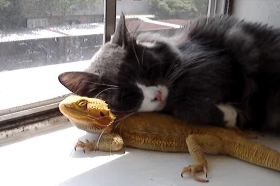 Neben jemandem einzuschlafen ist doch einfach schön!