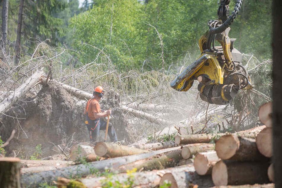Abräumen von Sturmbruch. 75 Prozent sind geschafft. Doch nun kommen die Sägewerke nicht mehr hinterher, zudem sinkt der Holzpreis.