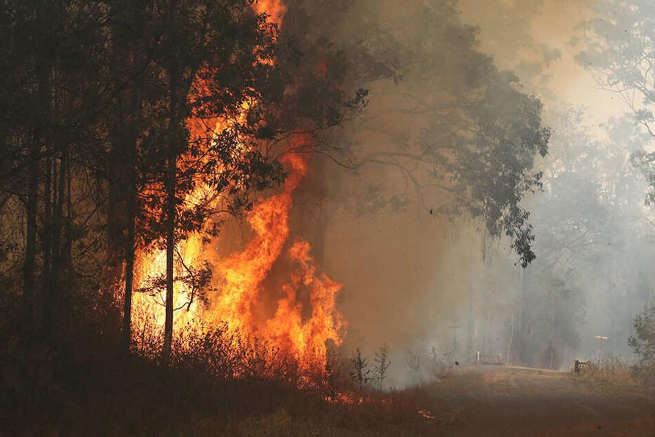 Hohe Flammen eines Buschfeuers lodern im nördlichen Bundesstaat New South Wales.