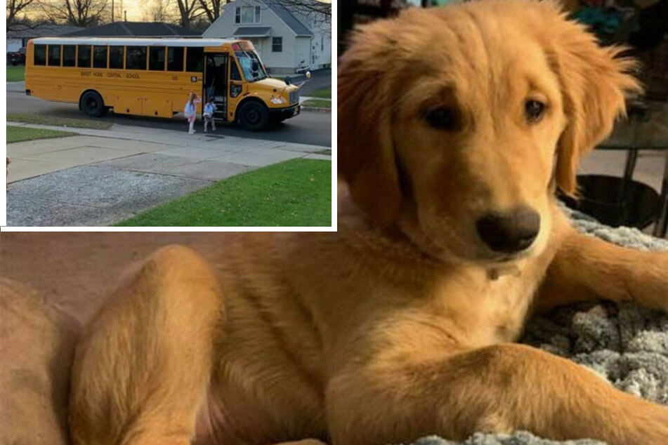 Golden retriever lights up the internet with this sweet morning ritual