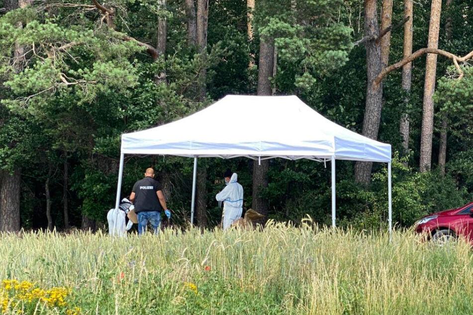 Polizeibeamte sichern unter einem Schutzzelt an der Fundstelle einer Toten Spuren. Die Leiche einer 23-Jährigen wurde nahe dem Wald im Landkreis Neustadt an der Aisch-Bad Windsheim gefunden. (Archiv)