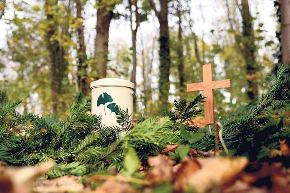 Erster Waldfriedhof mit Urnenbestattungen