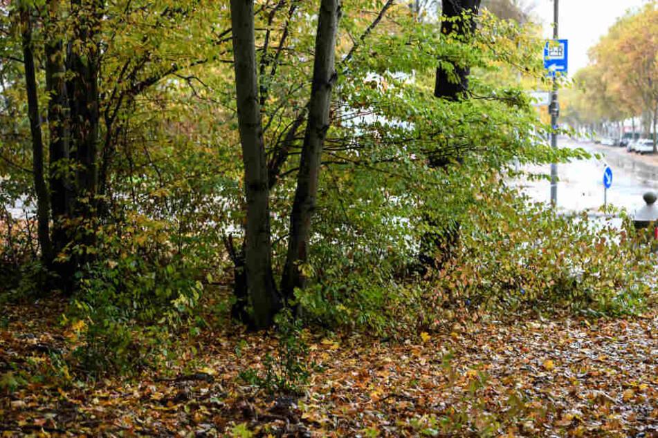 Bäume am Rand des Industriegebiets Nord in Freiburg: Die junge Frau wurde nahe einer Diskothek missbraucht.