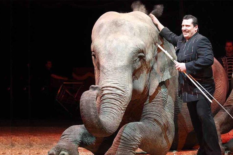 Eigentlich wollte Löhne solche Zirkusse fernhalten - doch ein Gerichtsurteil aus Hannover macht die Sache schwierig.