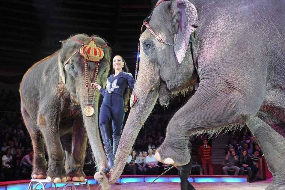 Die Künstlerin Jana Mandana steht auf den Rüsseln zweier Elefanten.