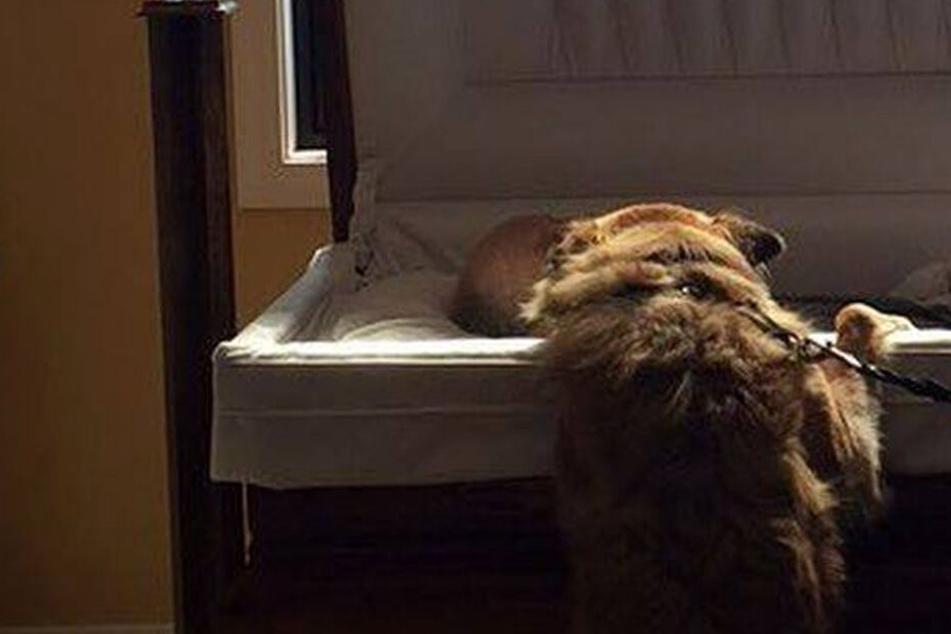 Herzzerreißend! Hier kuschelt ein treuer Hund zum letzten Mal sein geliebtes Herrchen