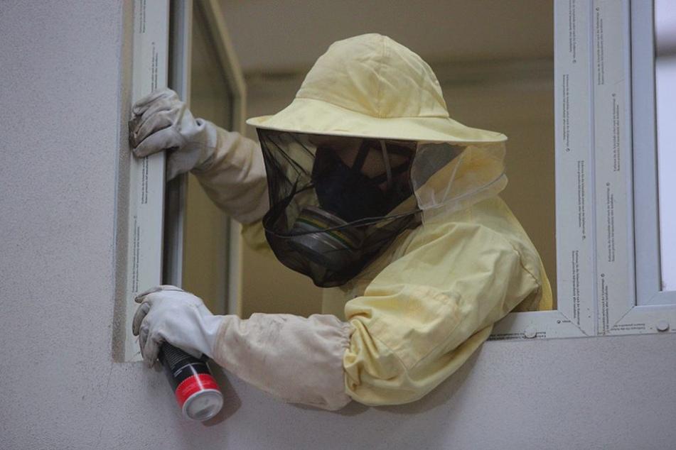 Nur mit Schutzkleidung rückt Eric Pieringer (31), Produktionsleiter bei Groli, Schädlingen zu Leibe. Besonders Fensterrahmen sind ein beliebter Rückzugsort.