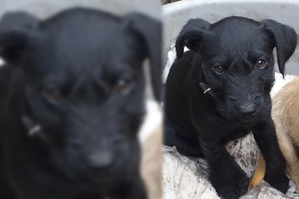 Herzinfarkt: Hunde-Welpe stirbt bei Feuerwerk