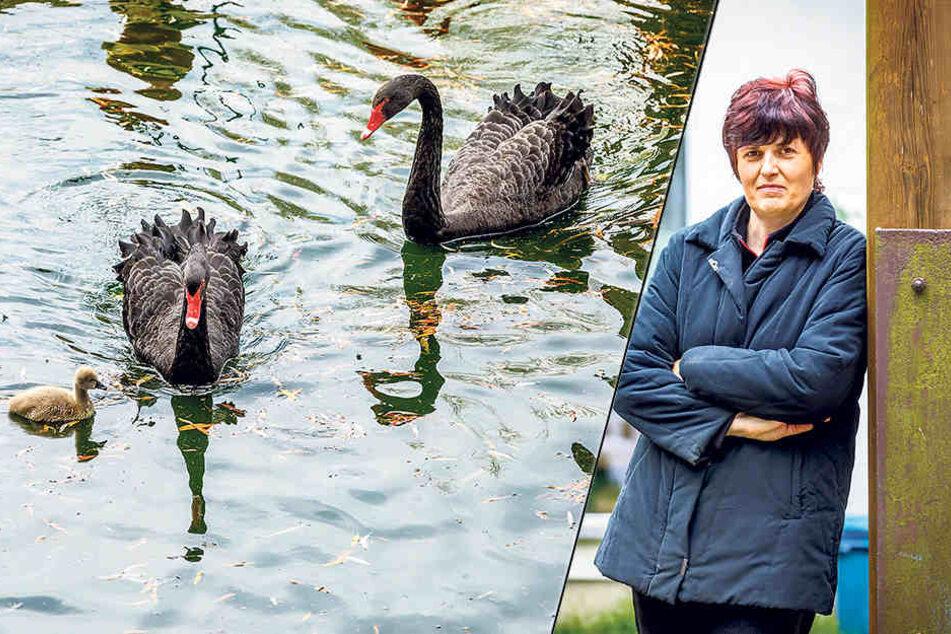 Bettina Lorch (51) ist die Chefin vom Eiscafé Zwergenland und freut sich über die niedlichen Küken.