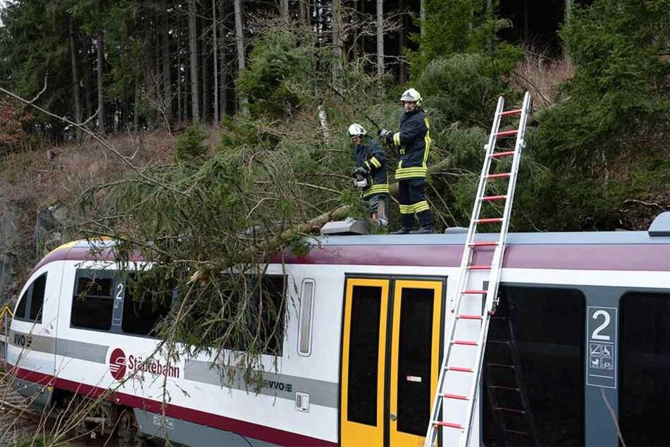 Die Städtebahn hat immer wieder mit stürzenden Bäumen auf ihren Strecken zu kämpfen.