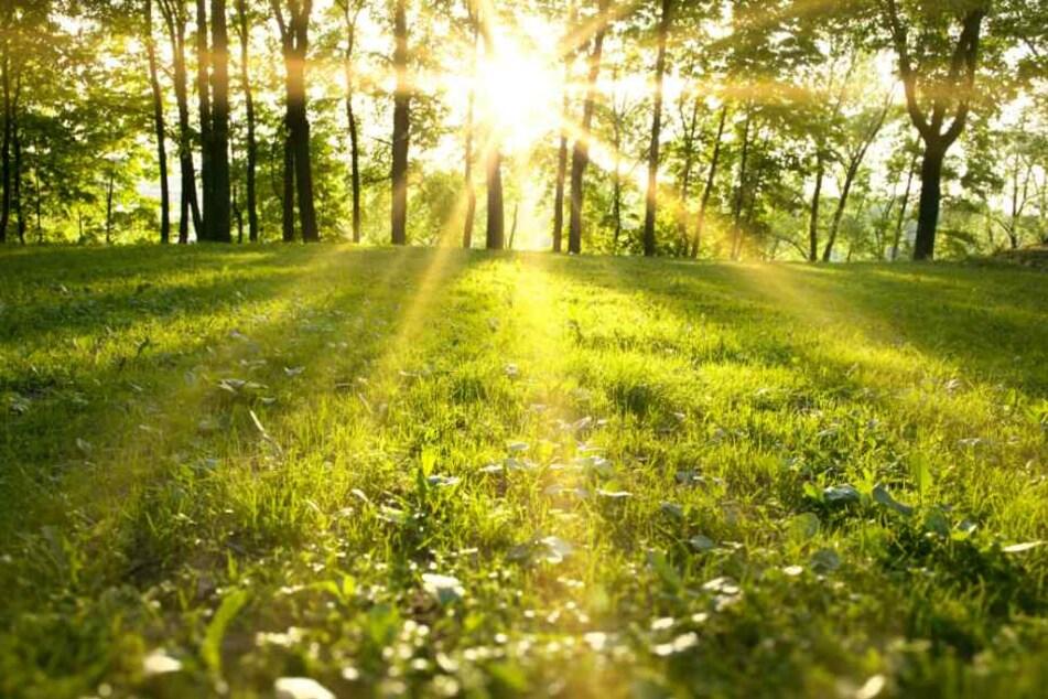 Bei strahlendem Sonnenschein ist es Zeit für einen Spaziergang. Symbolbild)