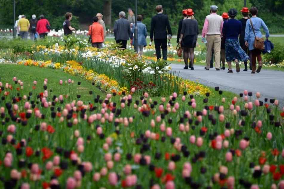 Die Landesgartenschau findet 2023 in Fulda statt.
