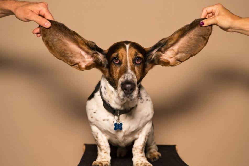 Hunde reagieren sensibel auf Geräusche und Düfte.