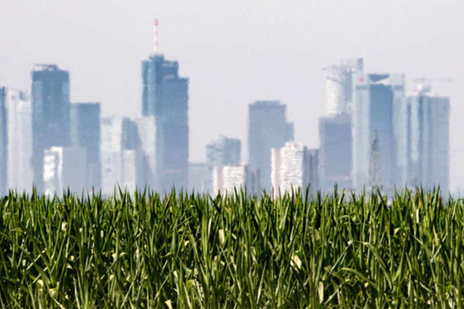 Flimmernd ist die Skyline von Frankfurt bei der Hitze zu erkennen.