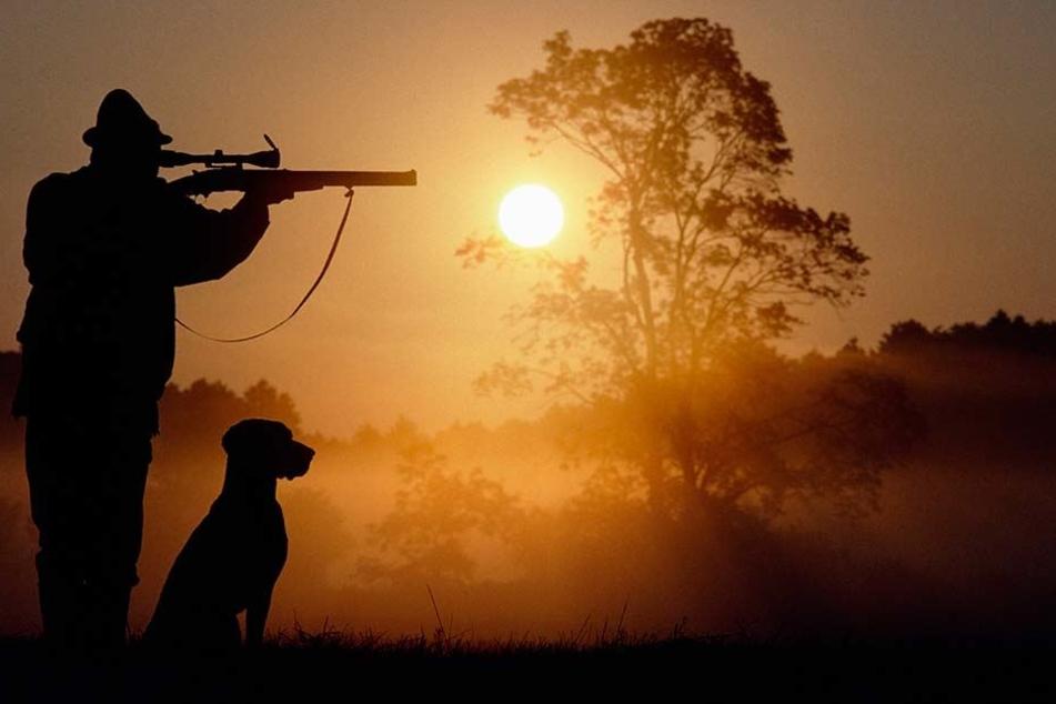 Kimme, Korn, Schuss: Die ersten  Jäger werden jetzt für das Erlegen von Wildschweinen bezahlt.