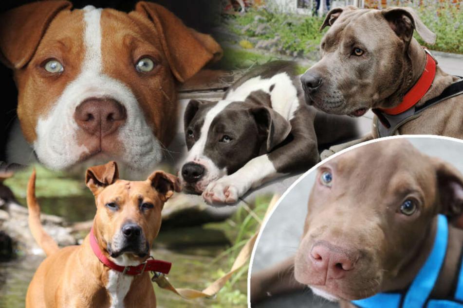 Das traurige Schicksal dieser Hunde: Warum stehen sie auf einer Liste?