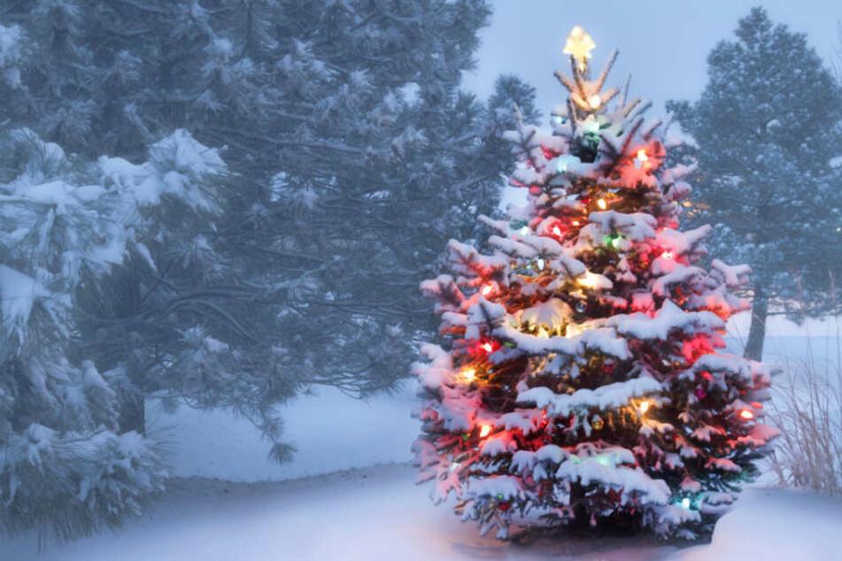 Besitzer findet nur noch Stumpf: Fiese Christbaum-Diebe sägen Tanne in Garten ab