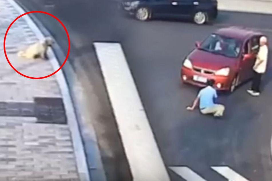 Mann läuft vor Auto und wird dann auch noch von einem Hund bloßgestellt