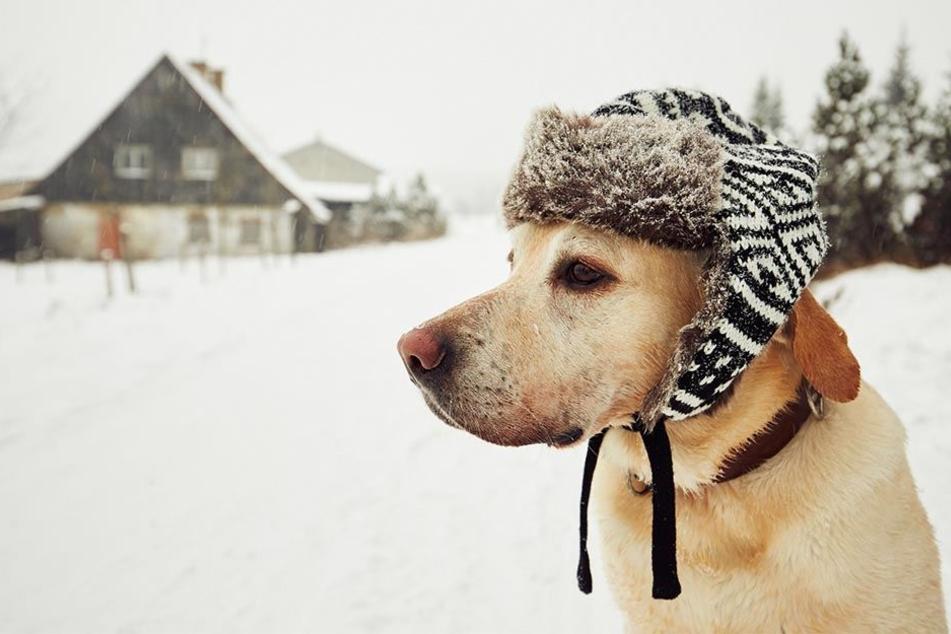 Cooler Hund mit typgerechter Mütze.