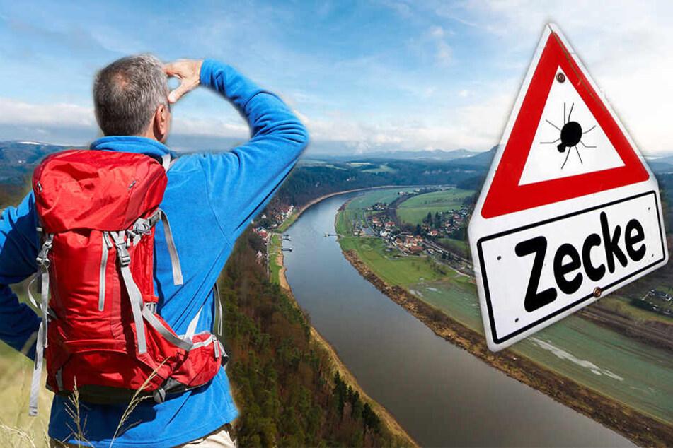 Zecken-Invasion! Amt erklärt halb Sachsen zum Risiko-Gebiet