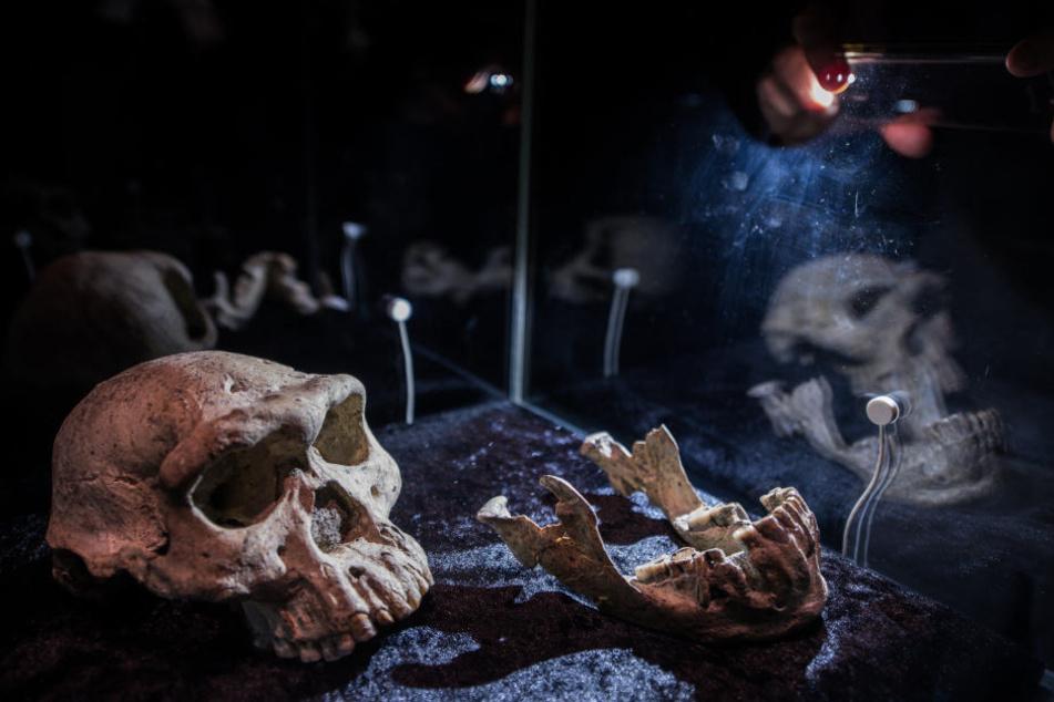 """""""Schädel 5"""" ist der weltweit älteste gefundene Schädel eines Frühmenschen außerhalb Afrikas."""