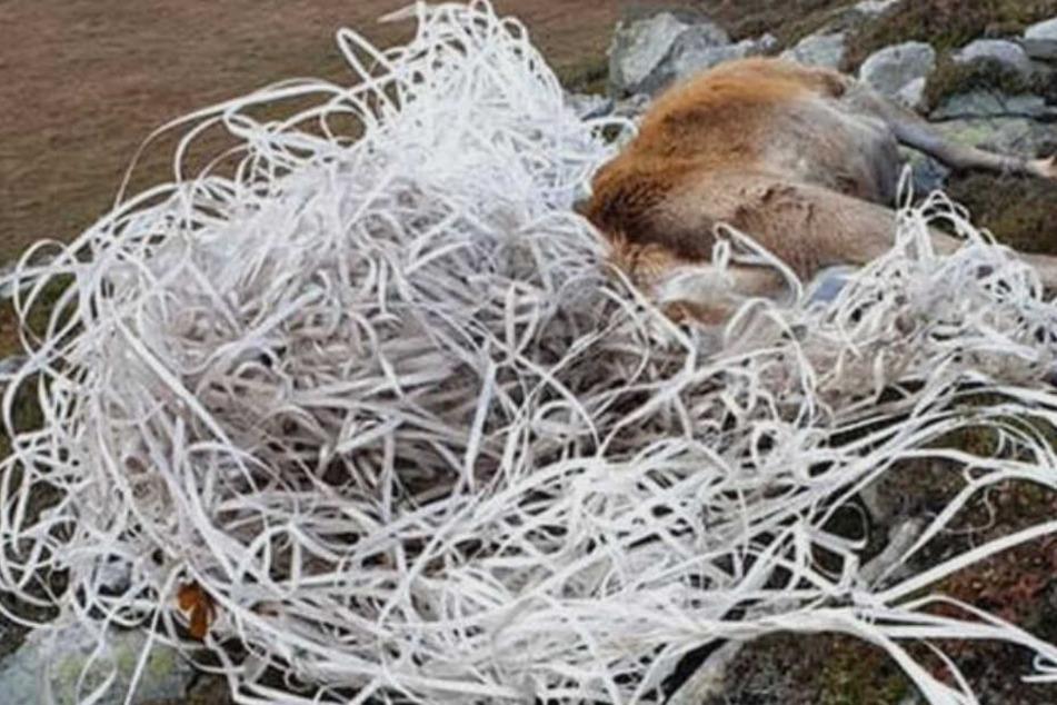 Achtlos weggeworfener Plastikmüll sorgt für tierische Tragödie