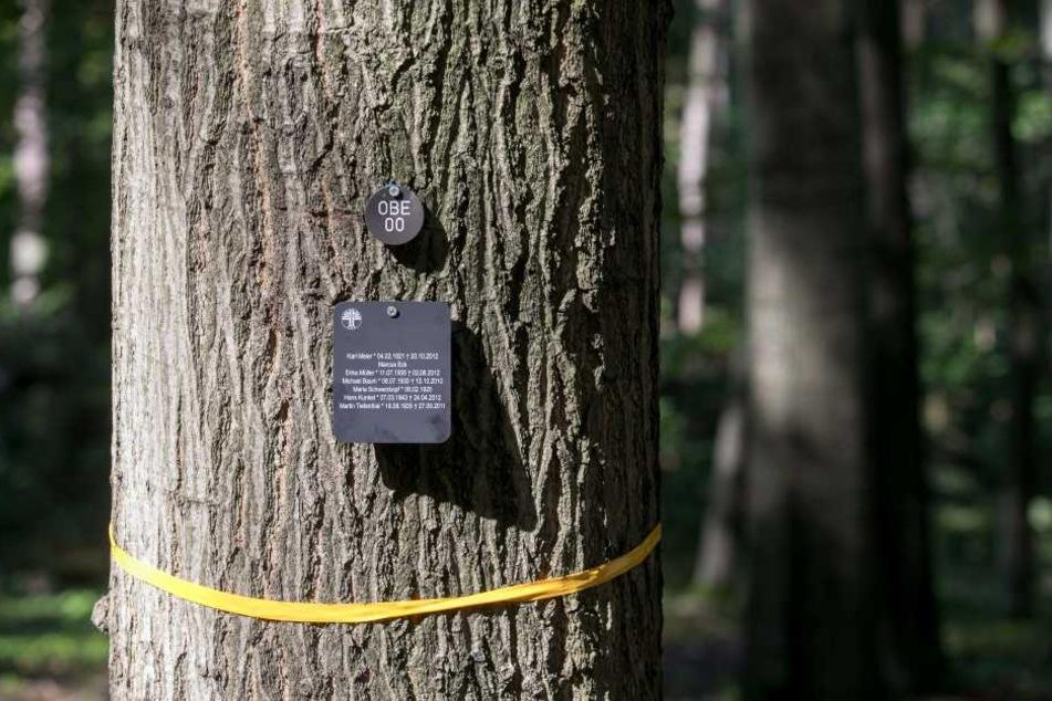 So könnte ein Musterbaum aussehen. Ein Basisplatz kostet 490 Euro.