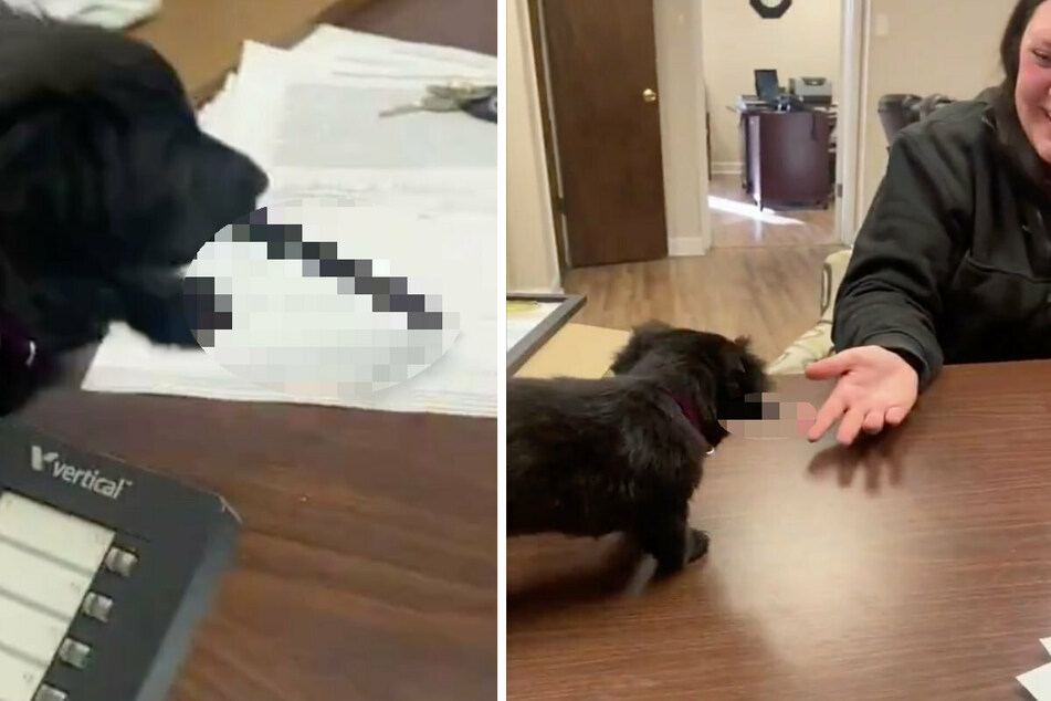 Niedlicher Hund begeistert Millionen: Was transportiert er denn da in seinem Mund?