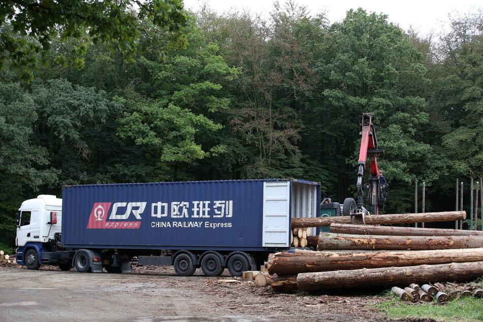 Aufgrund des Waldsterbens müssen Fichten gefällt werden. Das Holz wird im großen Stil ins Ausland exportiert.