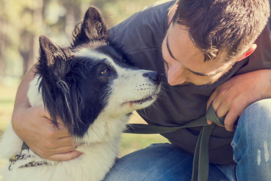 Das musst Du wissen, wenn Du einen Hund aus dem Tierheim adoptieren willst