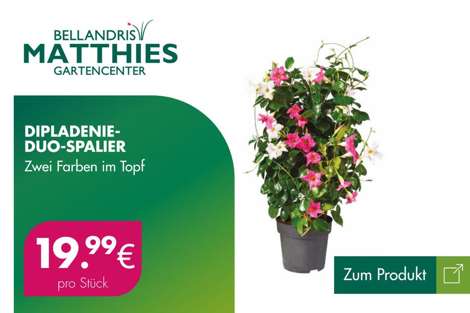 Blumenspalier für je 19,99 Euro