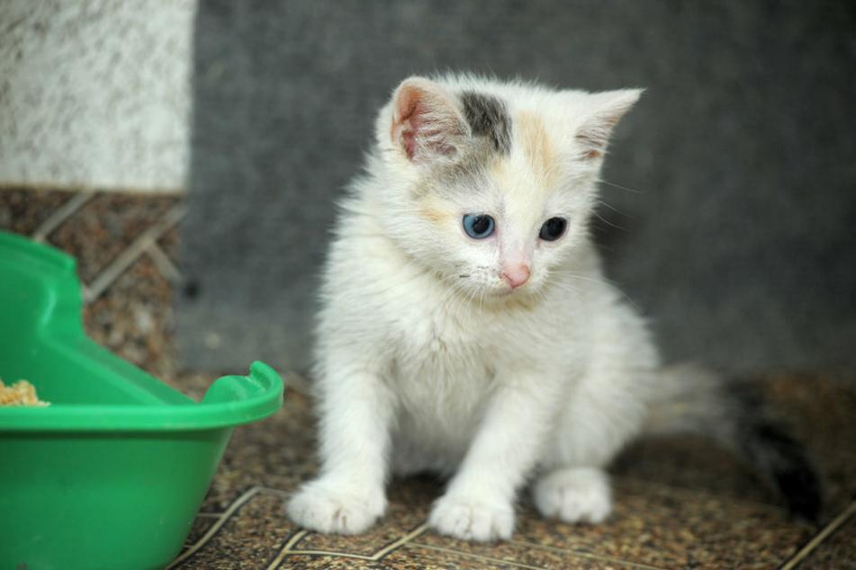 Das Katzenbaby konnte aus seiner misslichen Lage gerettet werden. (Symbolbild)