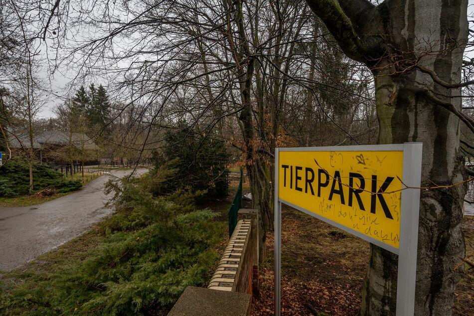 Der Weg zwischen Nevoigtstraße und Pelzmühle führt am Tierpark vorbei. Als einzige Tierart sind dort die Hausesel zu erleben.