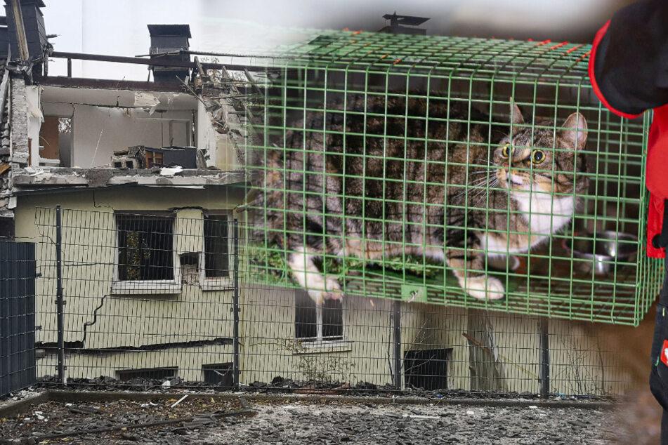 Nach tödlicher Haus-Explosion: Katzen vier Tage später gerettet!