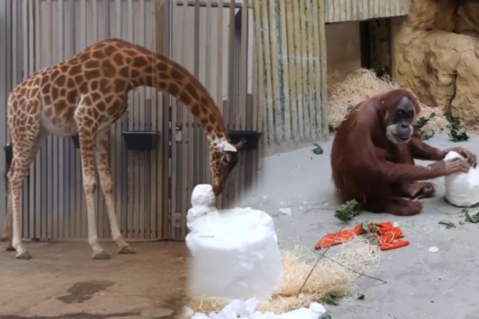 Indoor-Schneespaß für unsere Zoo-Tiere