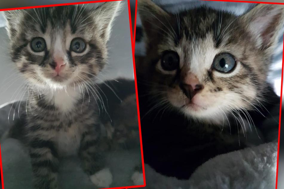 Diese beiden gibt es nur im Doppelpack: Ralfi und Fine müssen noch einiges lernen, dennoch suchen sie bereits ein neues Zuhause.