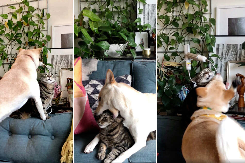 The dog just won't let the cat relax (collage).