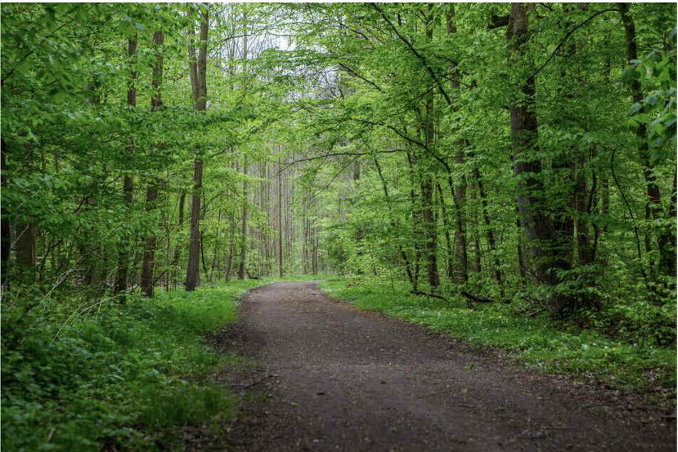 Auf einem Waldweg am Rande des Leipziger Wildparks geschah die brutale Attacke.