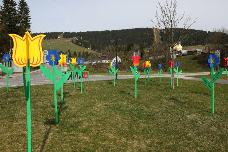 """Was ist das denn für eine """"Blumenwiese"""" in Oberwiesenthal?"""