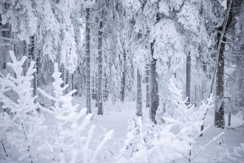Bei minus 15 Grad! Mutter setzt ihre Kinder nackt im Wald aus