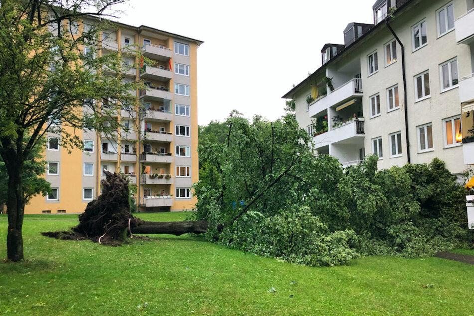 Viele Einsätze für Polizei und Feuerwehr: Gewitter entwurzelt Bäume in München