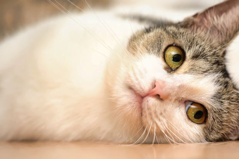 Family gets a jaw-dropping call 14 years after cat disappeared