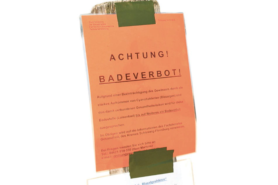 Droht demnächst ein Badeverbot? Davon könnte auch die Kobertalsperre bei Zwickau betroffen sein.